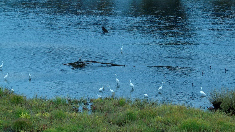 La rivière au coeur du Périgord noir