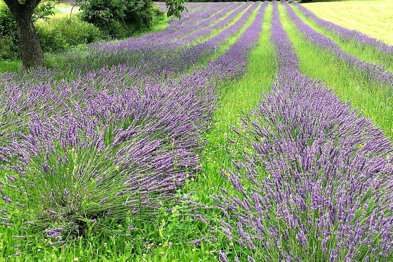 La provence près du Garrit en Dordogne
